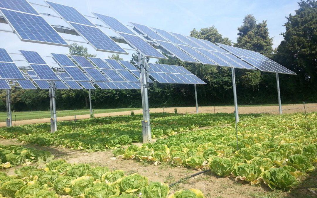 Energia-solar-fotovoltaica-con-cultivos-organicos.jpg